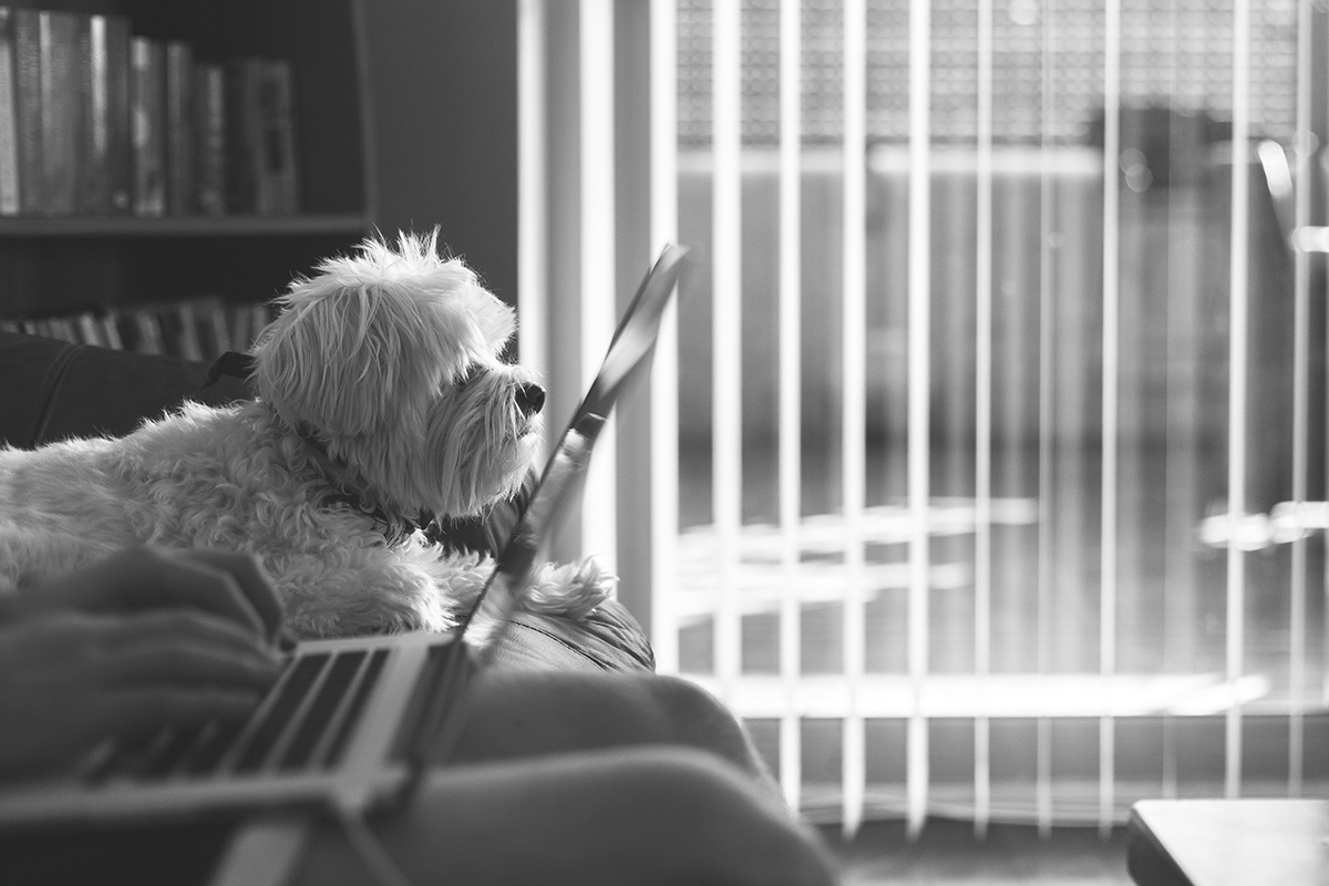 working remotely with dog